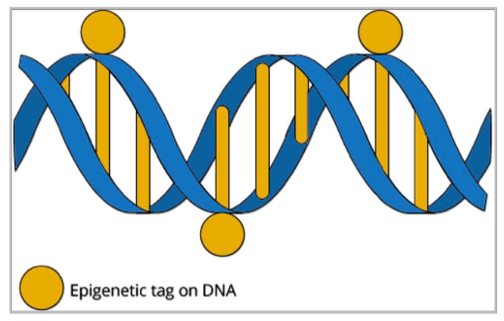 epigenetic tgs jpeg